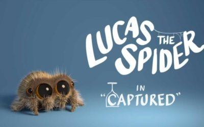 Lucas die Spinne wurde gefangen!